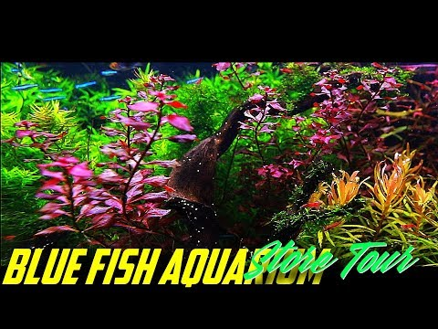 Blue Fish Aquarium Store Tour In Michigan!