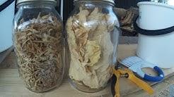 Virginiantupakkaa ( Nicotiana tabacum ) , itse kasvatettuna. Osa 2/3