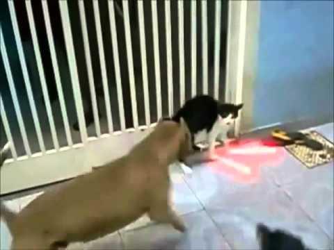 คลิบฮ่าๆ แมว Jedi !!!!!!!