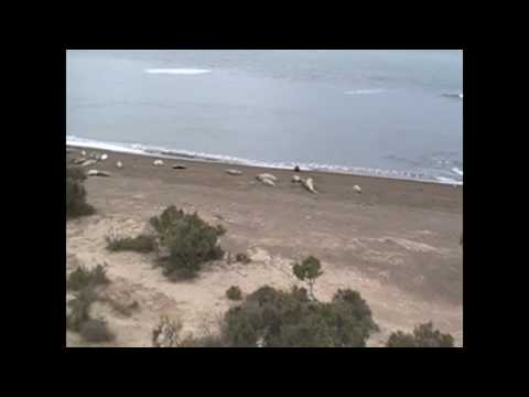 the marine wildlife in around the Valdes Peninsula, Argentina 2009