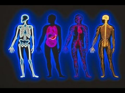 Anatomy & Physiology Review Meditation - YouTube