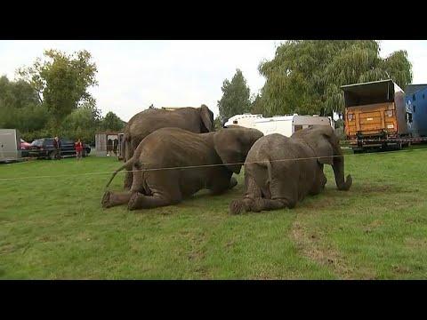 فيديو: التقاعد ليس للبشر فقط.. قانون جديد يحيل فيلة سيرك دنماركي للتقاعد…  - نشر قبل 2 ساعة