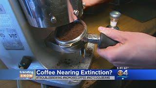 Trending: Coffee Nearing Extinction?
