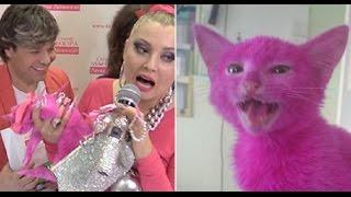 СМИ: Перекрашенный Леной Лениной в розовый цвет котенок скончался.