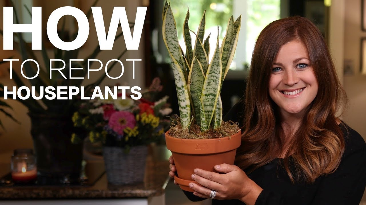 how-to-repot-a-houseplant-garden-answer