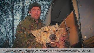 На северодвинском кладбище охотинспекторы застрелили волка, медведя ещё ищут // VDVSN.RU