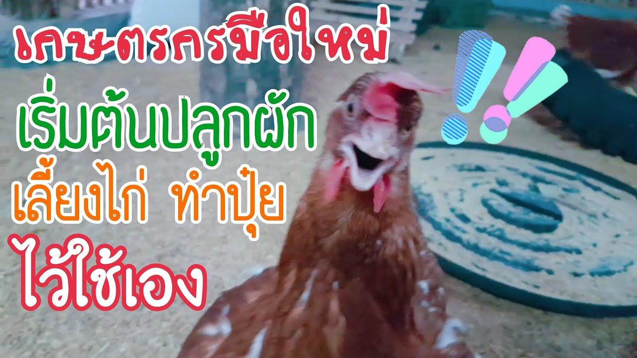 Lucky Farm EP.3 แล้งนี้ปลูกผัก 1 งาน มีระบบน้ำ ทำปุ๋ย เลี้ยงไก่
