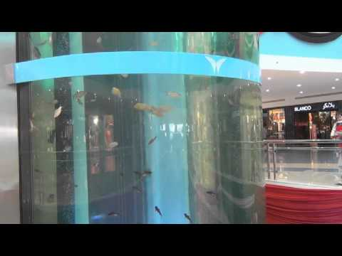 Mushrif Mall - Elevator Aquarium in Abu Dhabi