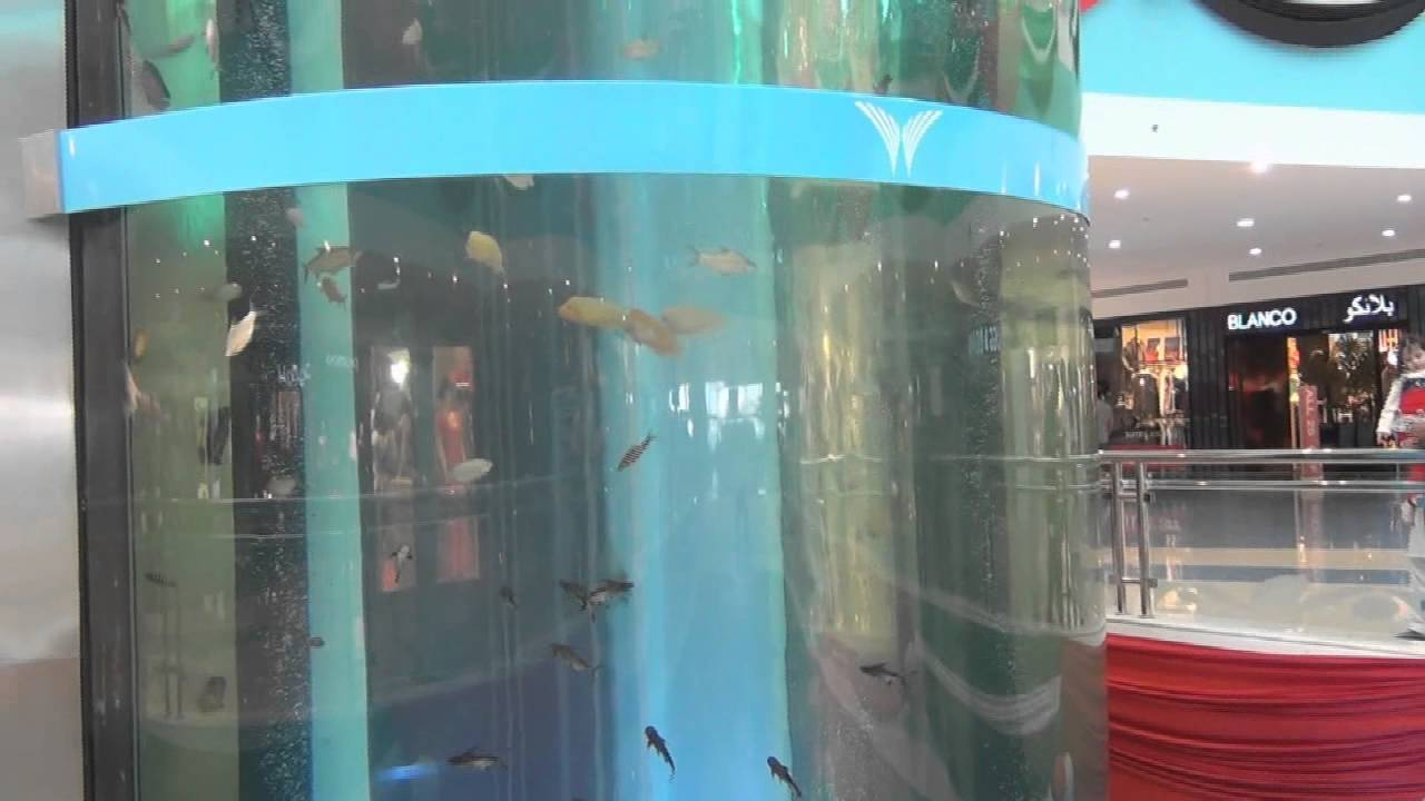 Fish aquarium in uae - Fish Aquarium In Uae