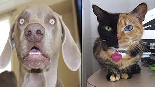 Funny Animal Fail Compilation - Funniest Dog Fail Compilation 2021 [Funny Pets] | CutePetsGarden #5