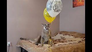 Сюрприз для Месси! Воздушные шарики на день рождения.