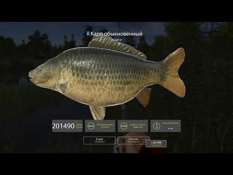 Русская рыбалка 4 Карп обыкновенный редкий трофей