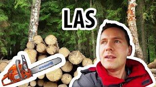 Drewno z Lasu - Ile Kosztuje i Jak Kupić? (#27)