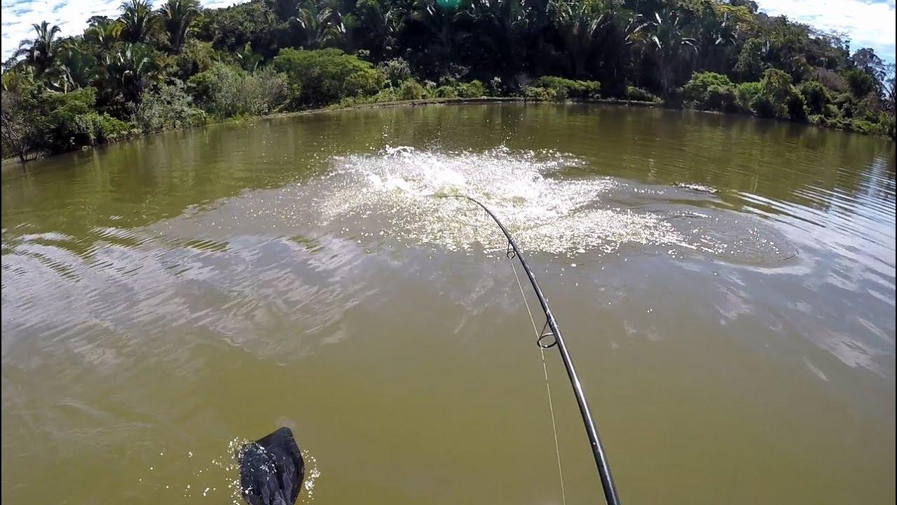 PEIXE FISGADO VIRA ISCA ENQUANTO É PUXADO! Pescaria.