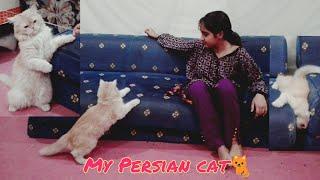 Our Persian cat | vlog#71