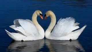Симфония любви. Symphony of love. Sensual romantic music for making love music by Yakuro.