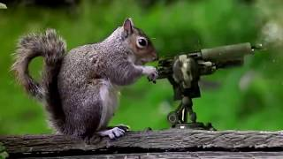 Hài hước chó bắn súng troll hại não   YouTube 720p