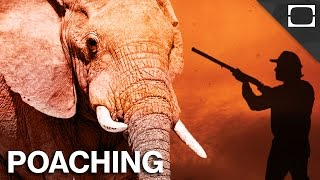 Why Can't We Stop Poachers?