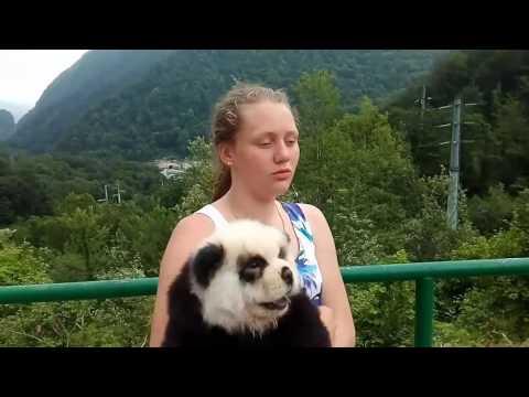 Вопрос: Почему китайцы не продают панд?