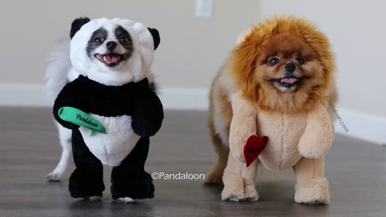 Pandaloon Panda Puppy and Friends Halloween Costumes AS ...