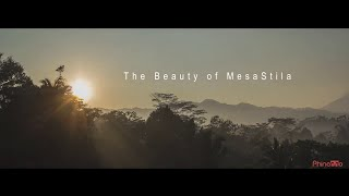 Overview The Beauty of MesaStila