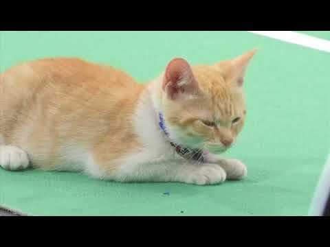 Kittens gear up for Kitten Bowl VI