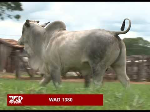 LOTE 83 - WAD 1380