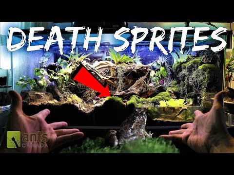 DEATH SPRITES: Creating a Frog Haven & Ant Hell