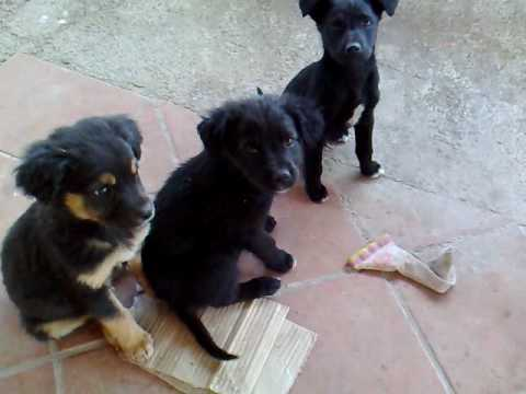 regalo cuccioli di cane - YouTube
