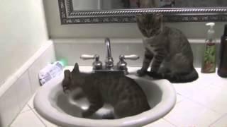 Смешные кошки. Подборка 2015