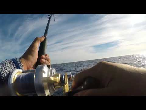 Fishing Cabo In Boston Whaler 13 Ft