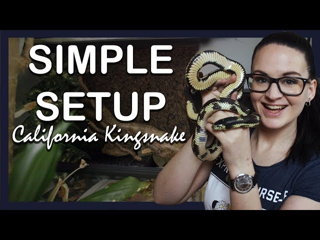 SIMPLE SETUP: CALIFORNIA KINGSNAKE