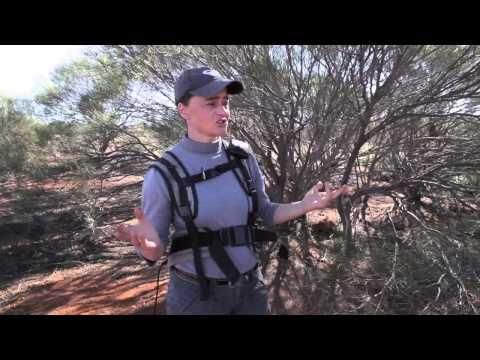 Gold Detecting Western Australia - Rules Talk