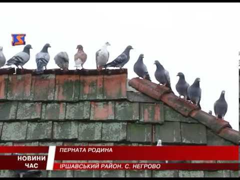 На Іршавщині голубар