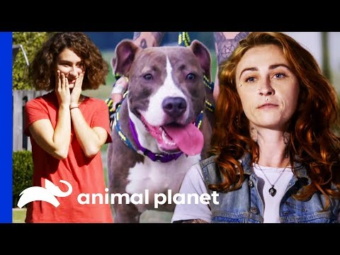 Will Polo Be The Perfect New Playmate For This Family? | Pit Bulls & Parolees