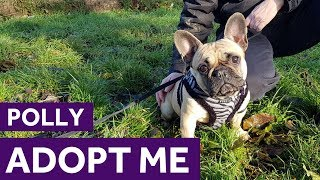 Adopt Polly | Dogs | The Mayhew