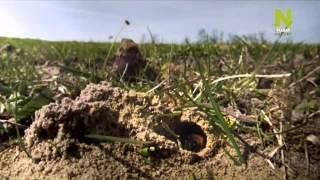 Новая дикая природа  Могучие силы природы на маленьком островке земли 1 серия 2013