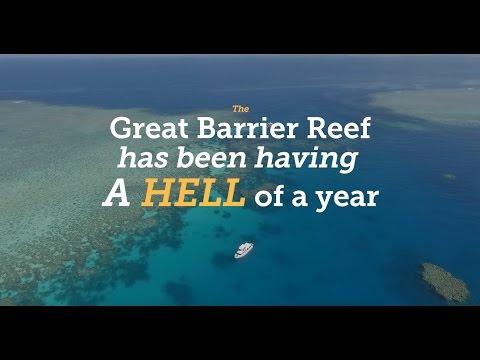 Raise The Reef