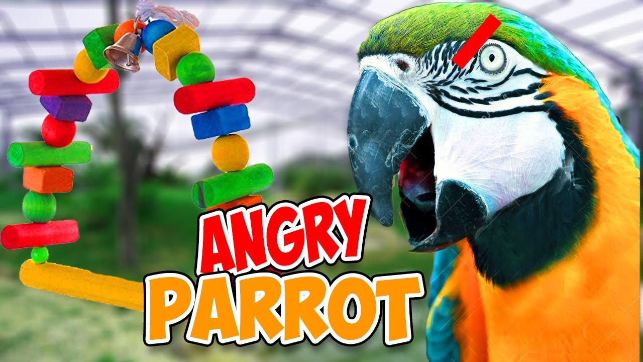 ANGRY PARROT ATTACKS HER NEW TOY!