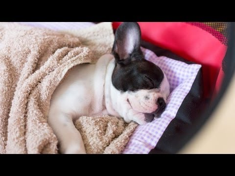 How to Set Up an Area for a New Puppy | Puppy Care