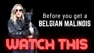 Before you get a Belgian Malinois watch this