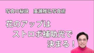 写真の秘訣 廣瀬雅弘写真術→http://www.masahirohirose.com 窓際で花を...