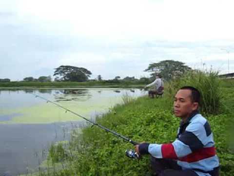Mancing Mania Ikan Kutuk