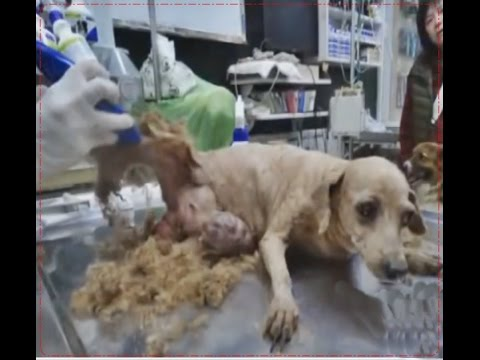 Shame!!!how this dog survived Animal Rescue 2017
