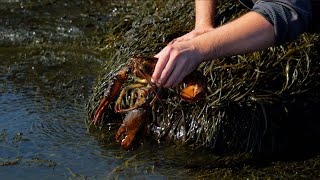 I bought a pet lobster and released him back to the ocean | Alex Ketchum