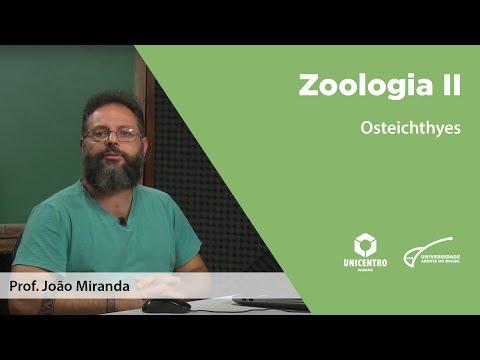 [BIO] Osteichthyes - Zoologia II