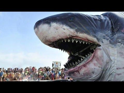 Größter Hai Der Welt Länge