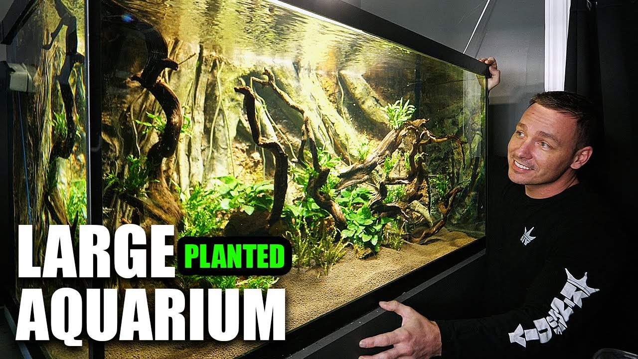 THIS AQUARIUM IS ABSOLUTELY PHENOMENAL!! - download from YouTube for free