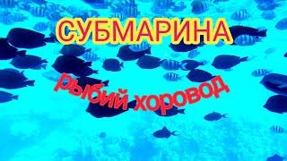 Шарм эль Шейх 11 января 2021 г Субмарина Батискаф Ура рыбы есть в Красном море