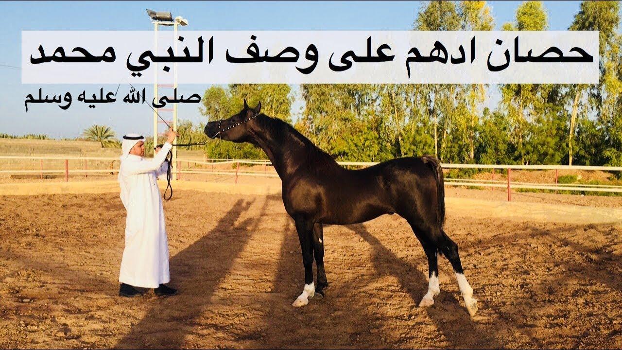 الحصان العربي الأصيل الأدهم كما ذكره رسول الله